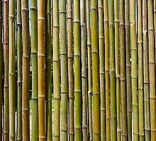 Bamboo by Atanas Bozhikov