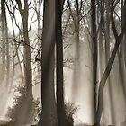 Winter fairy woods by kathijones