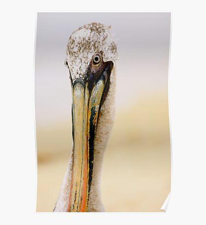 posing pelican  Poster