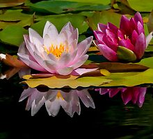 Pink Water-Lilies by Susie Peek