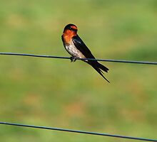 bird on a wire by Kateogrady