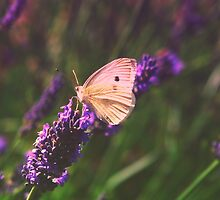 White wings on lavender by AngelaFoster