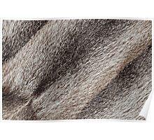 River rat coypu or nutria rough fur texture Poster