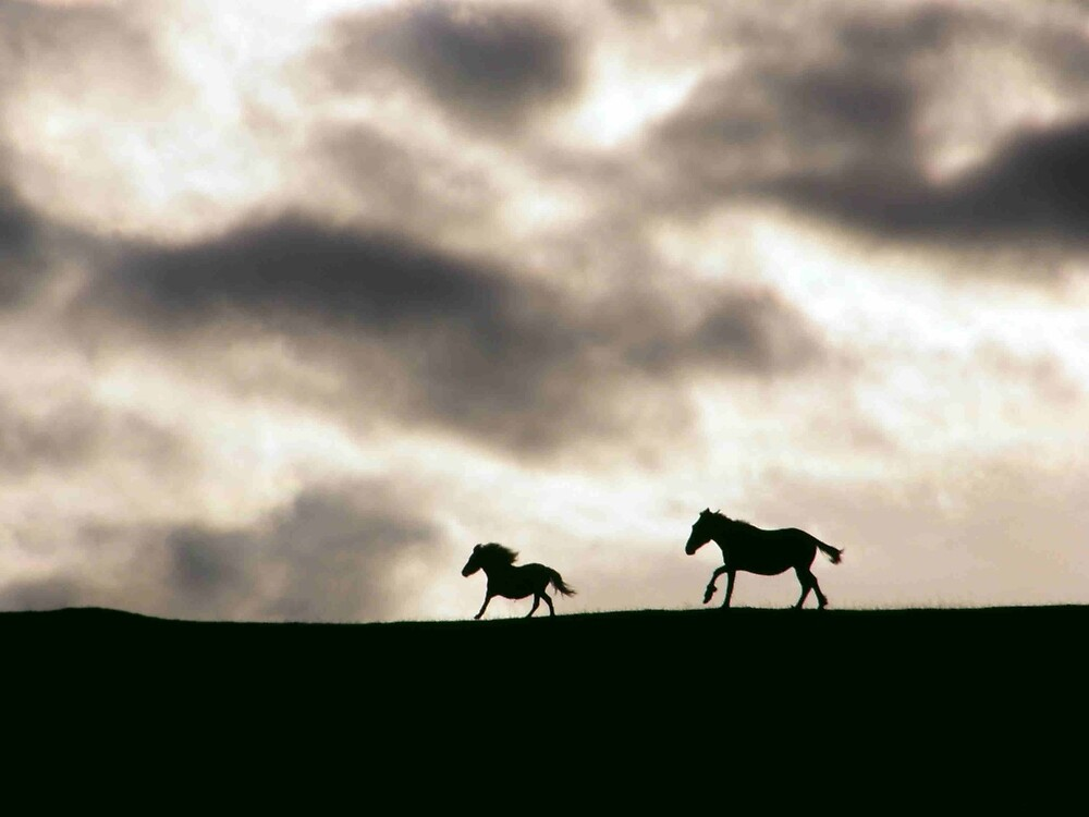 Evening Horses Derry, Ireland. by mikequigley