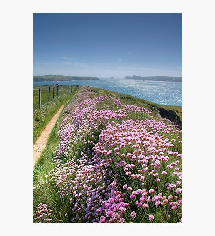 Pembrokeshire Coastal Path Photographic Print