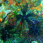 Treasured Sea Urchins in Full Colour by Richard Shakenovsky