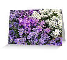 Purple And White........................Most Products Greeting Card