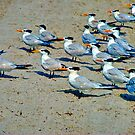 The Seagull Brigade by Roland Pozo