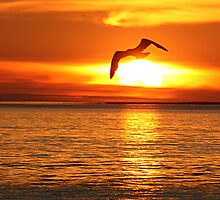 Flight into the Fire -- Seagull over Lake Michigan by John Carpenter