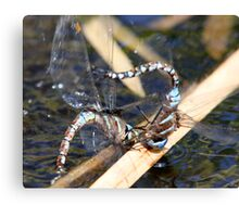 Darner Love: Trials and Tribulations Canvas Print