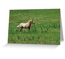 Beauty On The Move! Greeting Card