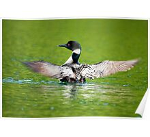 Loon Poster