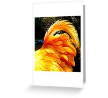 Chicken's Bum Greeting Card