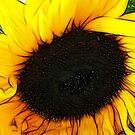 Fractalius Sunflower by Jo Newman