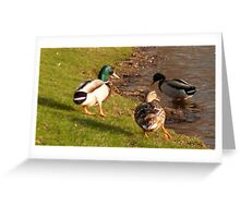 Ducks Playing Greeting Card