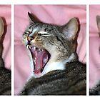 Tribble Yawning by MoGeoPhoto