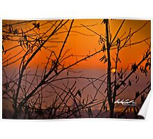 Sunrise in Collingwood Poster