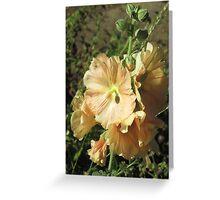 Peach Hollyhock II Greeting Card
