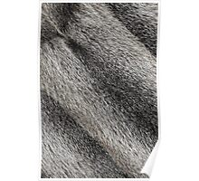 River rat coypu or nutria rough fur background Poster