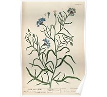 A curious herbal Elisabeth Blackwell John Norse Samuel Harding 1739 0052 Small Blue Bottle Poster