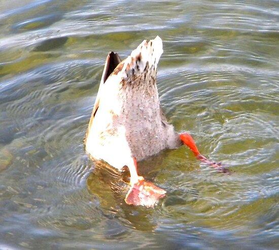 Duck Bum by fireplug