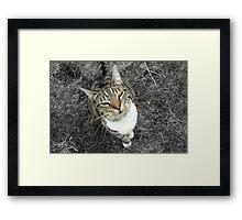 Willow Framed Print