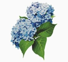 Blue Hydrangea Profile by Susan Savad