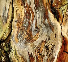 Colors Of Bark by Debbie Oppermann