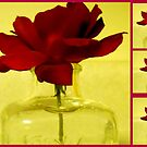 Rose in Bottle by debbiedoda