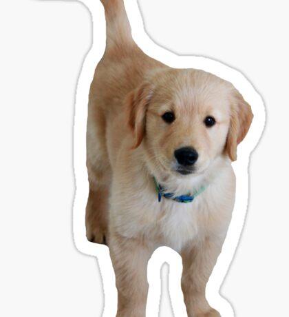 Cute Lil Puppy Sticker