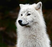 White Wolf by Yannik Hay