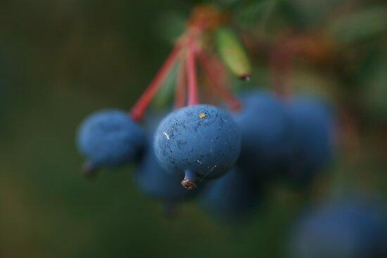 Berries by Sean Farragher