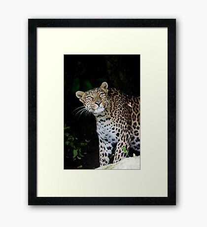 Hmm.......Look's Like Rain Framed Print