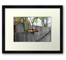 Newly Hatched Monarch Butterfly Framed Print