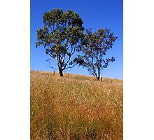 Australian Rural Scenic Photographic Print