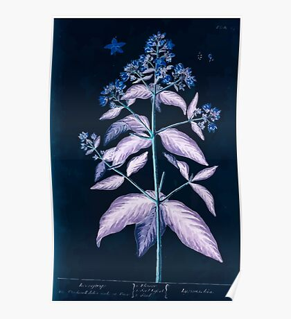 A curious herbal Elisabeth Blackwell John Norse Samuel Harding 1739 0072 Loostrife Inverted Poster