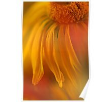Sneezeweed Abstract Poster