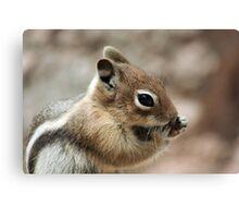 Golden Mantled Ground Squirrel  Canvas Print