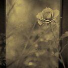 Rose In Light by Dragomir Vukovic