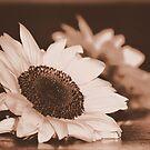 Summer Sunflower by Carrie Bonham