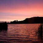 Sunset at Rotorua, New Zealand by Rachel  Chaikof