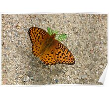 Pretty Butterfly Poster