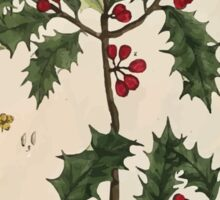 A curious herbal Elisabeth Blackwell John Norse Samuel Harding 1737 0526 The Holly Tree Sticker