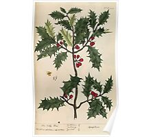 A curious herbal Elisabeth Blackwell John Norse Samuel Harding 1737 0526 The Holly Tree Poster