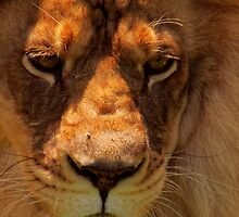 In the Eyes of the King by shutterbug2010