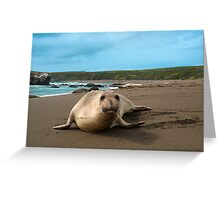 Female Northern Elephant Seal,  mirounga angustirostris, Greeting Card