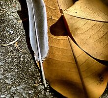 Feather and Leaves by Bob Wall