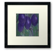 Purple Plums Framed Print