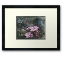 Wild Rose1 Framed Print