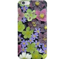 Colorful hellebore flowers iPhone Case/Skin